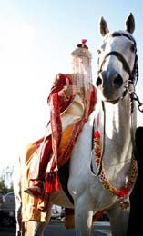 Indian Groom arrives on decorated horse