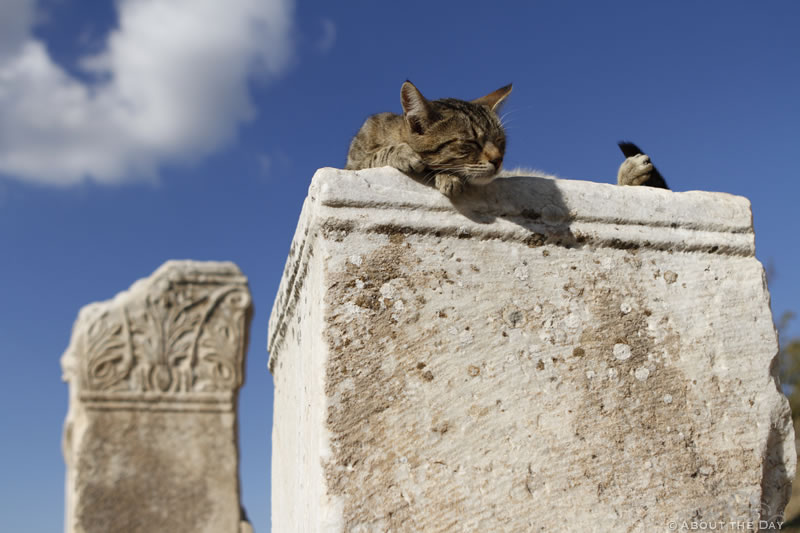 Cat sleeping in the ruins of Ephesus Turkey