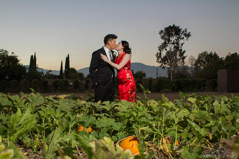 Bride in red asian dress kisses Groom in the pumkin patch at Hurst Ranch