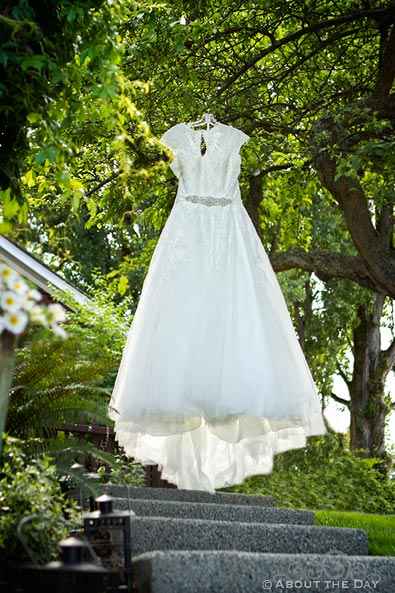 Brides dress hands in a tree