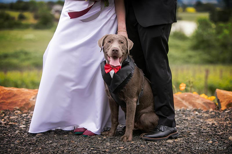 The bride and groom and their dog